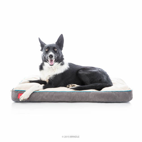 best dog beds for small dogs in 2019