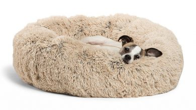 best dog bed for dogs that love to fluff their bed