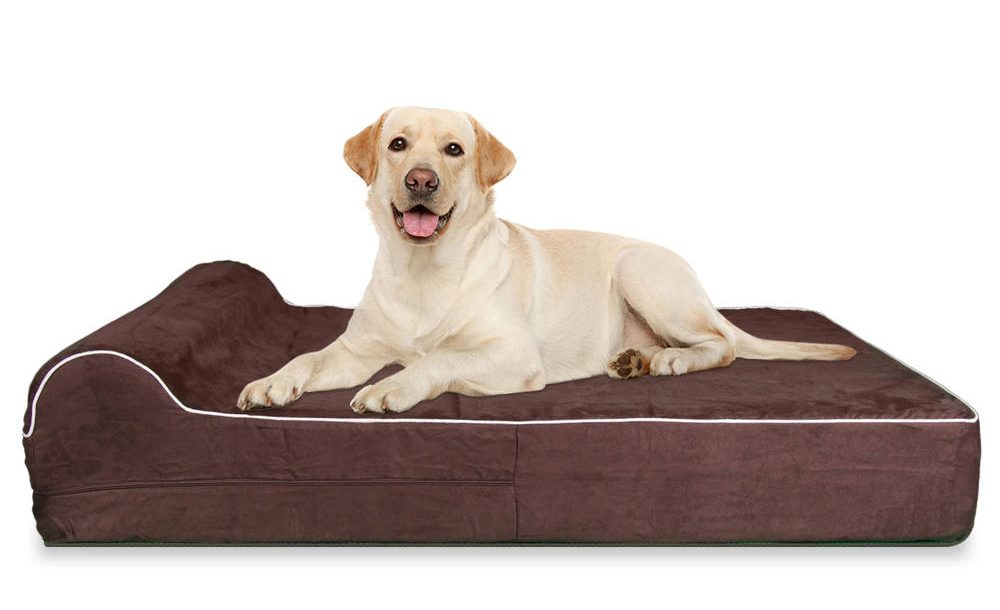 dog bed for spinal cord injury