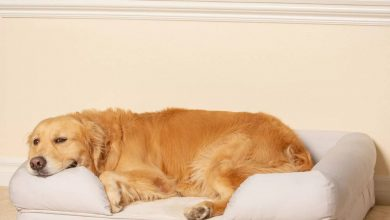 dog beds with bolster and memory foam